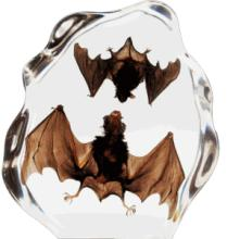 TWO Brown Bat in Clear Lucite #39658v2