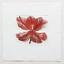 GRAINNE CUFFE (20TH/21ST CENTURY) Tulip Three Colour etching, 30 x 30cm Signed, inscribed with title