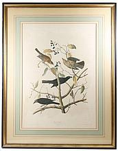 Bien Chromolithograph After Audubon, Rusty Grackle