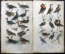 Jonston, John & Merian, Matthias & Casper C1660 Pair of Hand Coloured Bird Prints