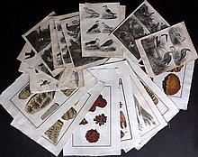 Diderot, Denis & d'Alembert, Jean Lot of 15 Folio Copper Plates - Botanical, Seaweed, Corals & Fossils WITH Rees, Abraham C1810 Lot of 44 Bird Prints from the Cyclopaedia