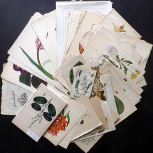 Botanical Prints & Fungi 19th Century (Mostly) Lot of approx 110 Antique Prints
