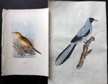Gray, George & Gray, John 1830-49 Pair of Hand Coloured Bird Prints. Australian Wren & Chinese Magpie