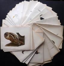 Von Wright, Magnus & Wilhelm C1920 Good Lot of 225 Folio Swedish Bird Prints