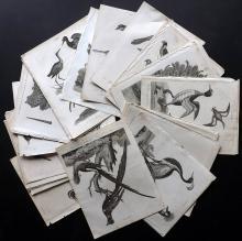 Wilkes, John C1800-1820 Lot of 38 Bird Prints. Incl Parrots, Toucan, Birds of Paradise, Peacock, etc