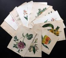 van Geel, Pierre C1830 Lot of 21 Hand Coloured Botanical Prints