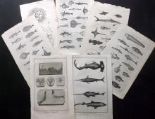 Fish & Marine 18th Century Lot of 23 Folio Copper Plates