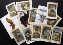 Natural History - Bats 18th-19th Century. Lot of 13 Prints