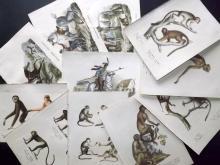 Schinz, Heinrich Rudolf 1824 Lot of 22 Hand Coloured Animal Prints