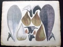 Seba, Albertus C1750 Group of 3 Large Hand Coloured Prints of Shells & Marine Life
