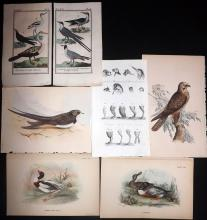 Birds 1785-C1890's Lot of 7 Bird Prints
