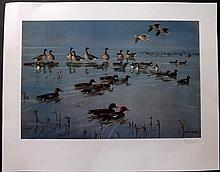 Scott, Peter Markham 1982 Signed Limited Edition Print. Widgeon and Pinkfooted Geese