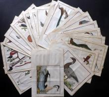 Martinet, Francois & Brisson, Mathurin Jacques 1760 Lot of 25 Hand Coloured Bird Prints