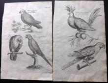 Willughby, Francis 1678 Pair of Bird Prints of Parrots