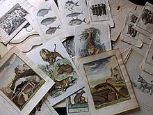 Natural History 18th - Early 20th Century. Lot of Approx 120 Antique Prints