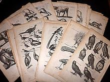 Merian, Caspar & Matthias and Jonston, John C1660 Lot of 61 Natural History & Bird Prints