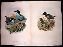 Gould, John C1860 Pair of Lithographs from the Birds of Asia