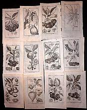 Monceau, Duhamel 1782 Lot of 26 Fruit Prints