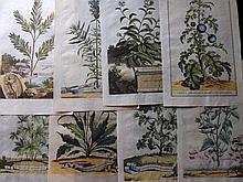 Munting, Abraham 1696 Lot of 25 Hand Coloured Botanical Prints