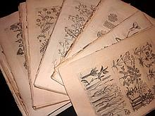 Hill, John C1760 Lot of 72 Folio Botanical Prints from the Vegetable System