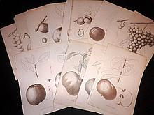 Pomologie de La France 1863 Lot of 86 Fruit Prints