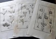 Rabel, Daniel & Buc'hoz, Pierre Joseph 1771 Lot of 20 Folio Botanical Prints (Faults)