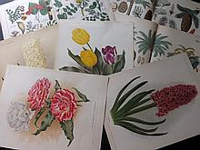 Botanical Prints 17th - 19th Century. Lot of 200 Engravings & Lithographs