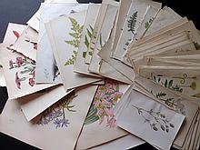 Botanical Prints 19th Century. Lot of approx 120 Engravings & Lithographs