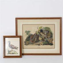 Two Ornithology bird prints; antique