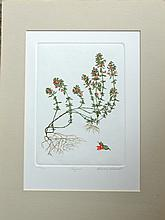 Thyme, Original signed and numbered etching, Barbie Tidwell, C. 1980