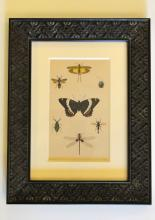 Butterfly and Dragonfly Insect Print, by Sonrel, 1850, Custom Framed