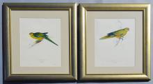 2 Edward Leer Limited Edition Parrot Prints