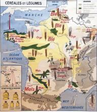 Productions de Céréales - Carte de France 1953