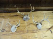 3 Deer Antler Mounts one  with Anasazi Pottery Shards