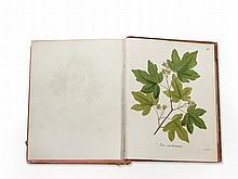 C. L. Willdenow, 'Abbildung der deutschen Holzarten', 1810-20