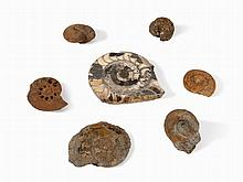 7 Fossil Ammonites & Nautilus, Swabian Alb, Jurassic