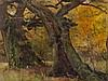 Eugen Bracht, Oil Painting, Oak Trees in a Park, 1901