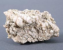 Fossile Schnecken, Turitella, Deutschland