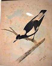 Neville Cayley, watercolour 'Magpie on branch',