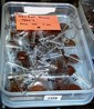 Box containing approx. 103 Australian pennies,