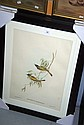 3 Framed Gould bird prints