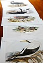 Set of 5 Gould bird prints, each mounted but