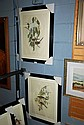 Pair of Gould prints of birds, newly framed and