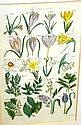 J E Sowerby antique floral bookplate, hand