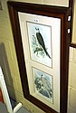 Pair of Prints of Falcons after engravings by Wolf
