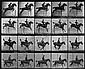 Muybridge, Eadweard: Horseback rider