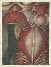 Gautier d'Agoty, Louis-Charles: Anatomische Ansichten des Unetrbauchs