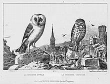 Delarue, Jean: Album d'oiseaux. Paris um 1860