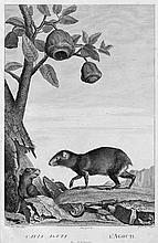 Lacépède, B. E. G. de und. G. Cuvier: La ménagerie de Muséum National d'Histoire Naturelle