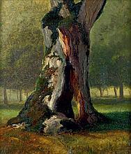Becker, August: Bemooster Stamm eines zerborstenen Baumes